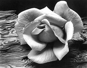Ansel Adams - Rose and Driftwood c.1932