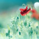 Miyako Koumura: Capturing Japan's Flowers For Posterity