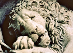 For Love Of Lions