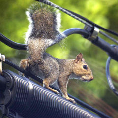 Shooting Long, Slow And Steady Bags a Squirrel On a Power Line