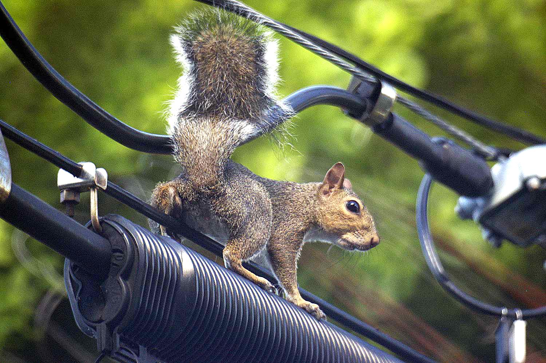 RR Blog Squirrel-Bleich copy