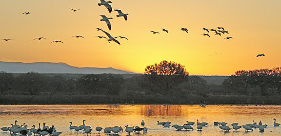Favorite Photo Places: An Amazing Wildlife Refuge