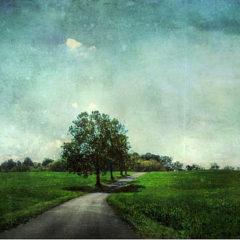 Textures Can Transform Your Photos Into Fine Art