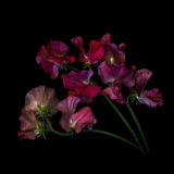Think Inside  the Box For Dramatic Flower Photos
