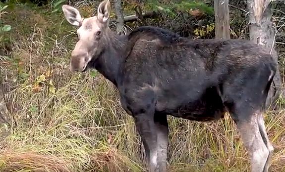 Documenting Maine's Penobscot River Wilderness. Part 2