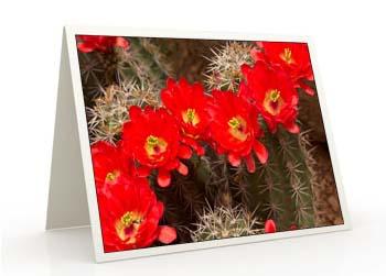 blog_greetingcard