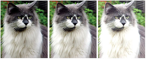 Standard Bracketing Is Good––With standard bracketing chosen for three shots, in increments of one exposure value (EV), the camera will shoot what it considers a correctly exposed image (center), then one under-exposed (left), and the third overexposed (right). The overexposed shot is a throwaway because highlight detail (in the fur) is gone and cannot be retrieved.